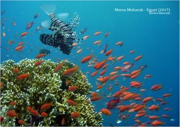 Reef south of Marsa Mubarak